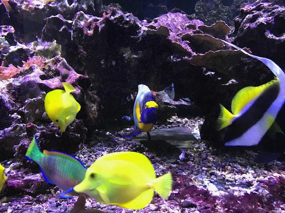Fische im Tierpark Nymphea.