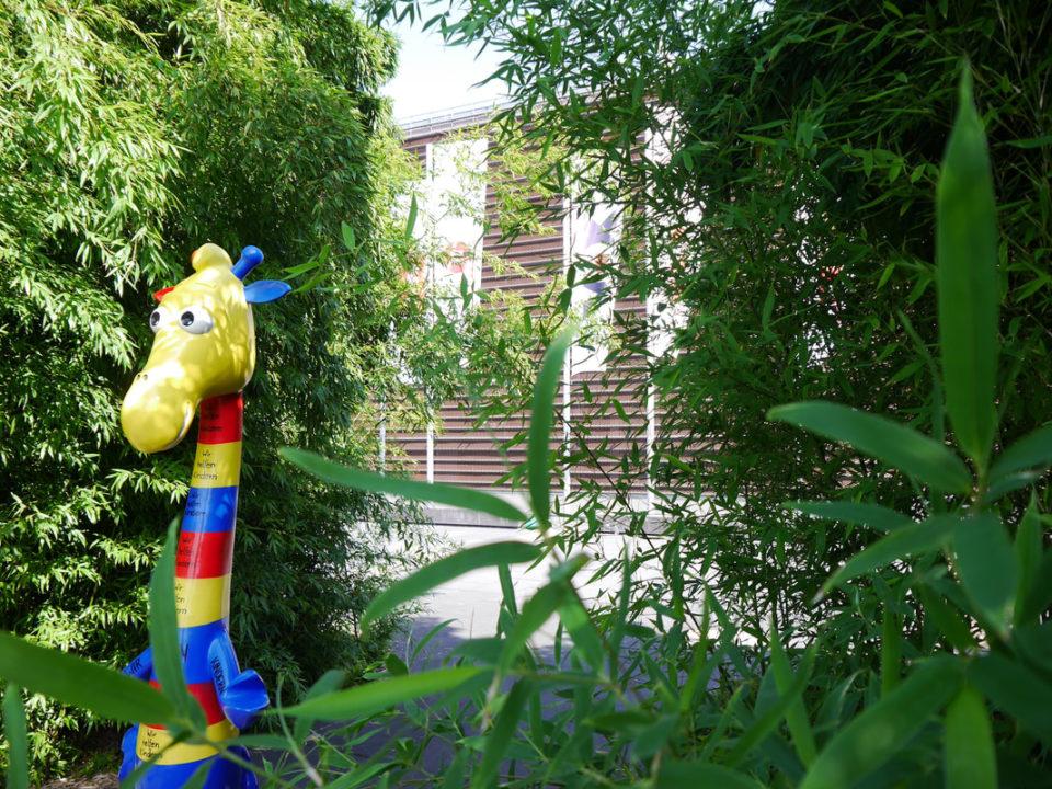 grossstadtsafari-koeln-rtl-spendenmarathon