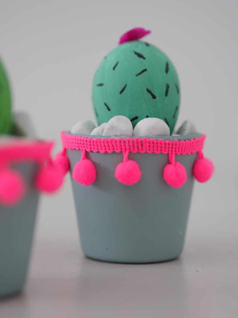 kaktus eier