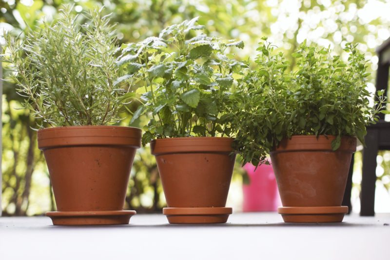 Kräuter richtig pflanzen