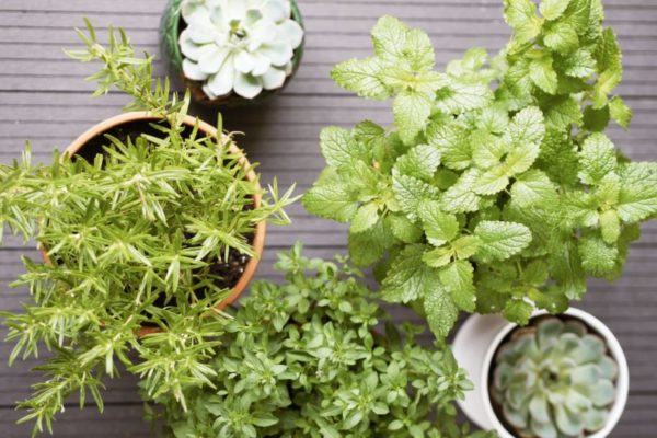 terrasse bepflanzen